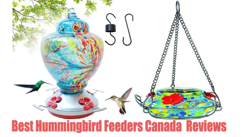 Best Hummingbird Feeders Canada Reviews